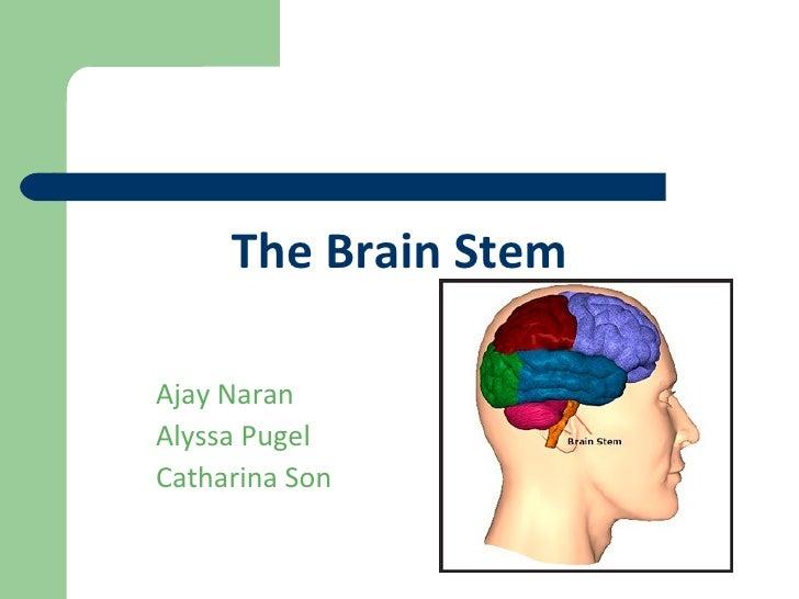 The Brain Stem Ajay Naran Alyssa Pugel Catharina Son