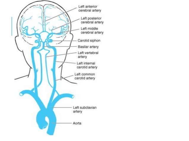 39865 additionally Poligono Willis Rm besides 1035983 also 4353970 together with 9886790. on circle of willis brain