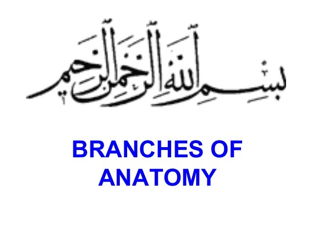 BRANCHES OF ANATOMY