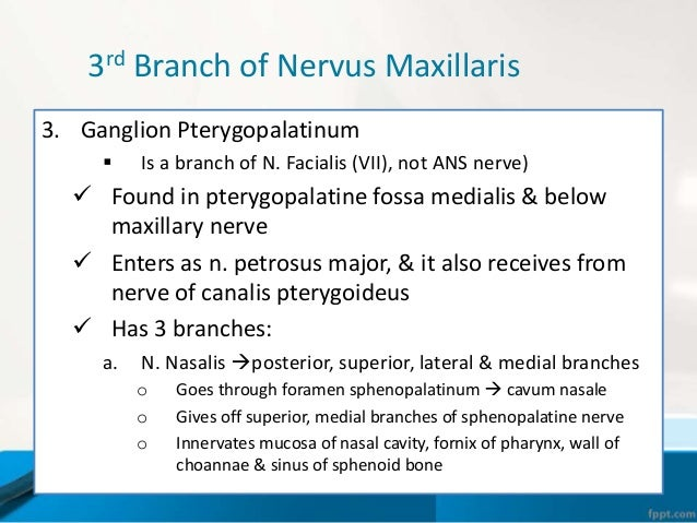 Branches of Trigeminal Nerve