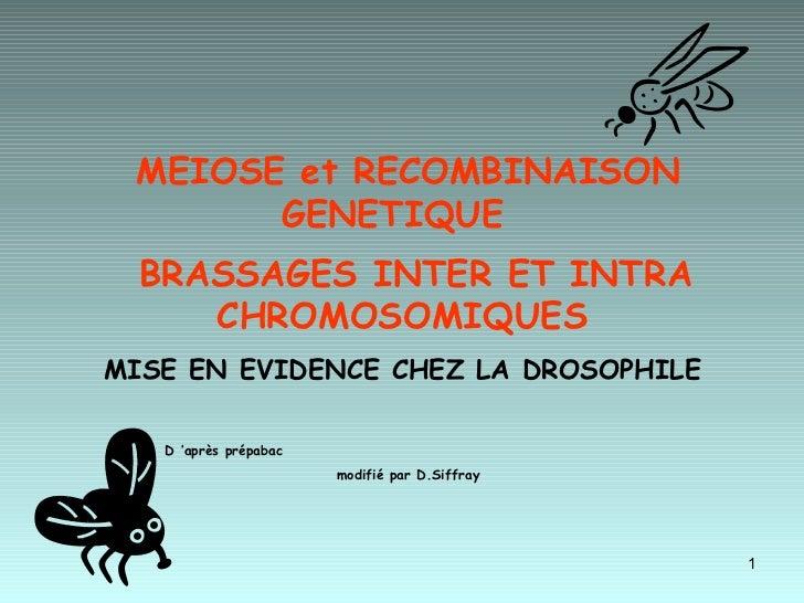 MEIOSE et RECOMBINAISON GENETIQUE  BRASSAGES INTER ET INTRA CHROMOSOMIQUES   MISE EN EVIDENCE CHEZ LA DROSOPHILE  D'après...