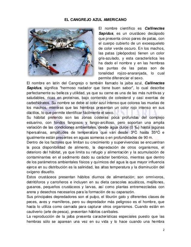 BRAVO ROBAYO GIOVANNY_AA4_CANGREJO_AZUL_AMERICANO