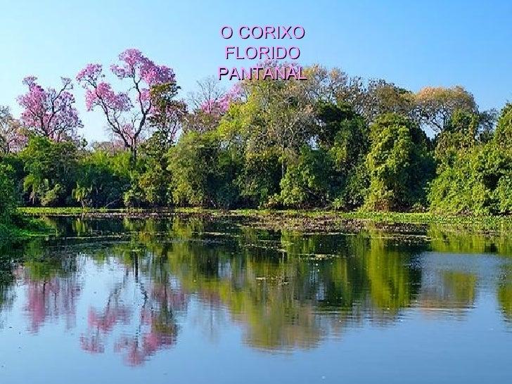 O CORIXO FLORIDO PANTANAL
