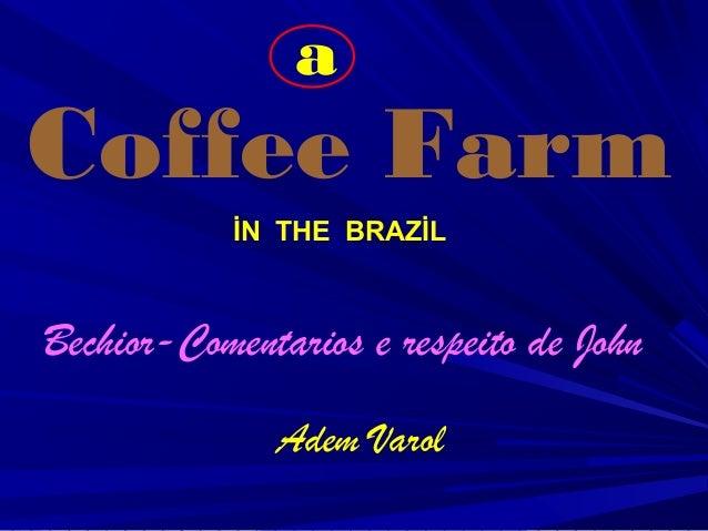 İN THE BRAZİL Coffee Farm Bechior-Comentarios e respeito de John Adem Varol a