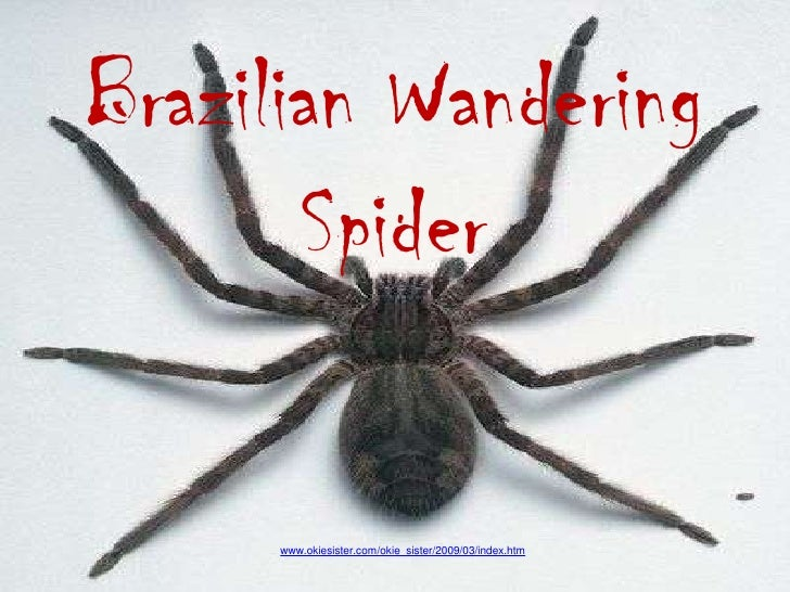 Brazilian Wandering Power Point