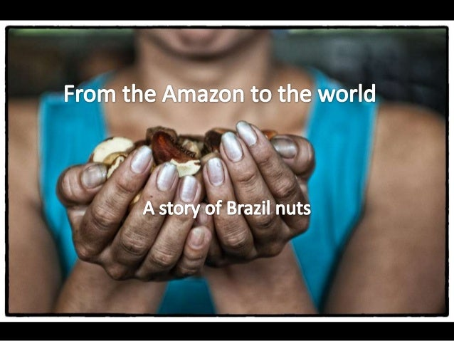 Every Brazil nut you eat comes from the Amazon rainforest.