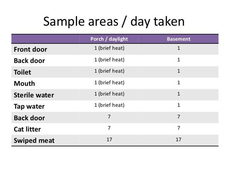 Home science - bread & microorganisms Slide 3
