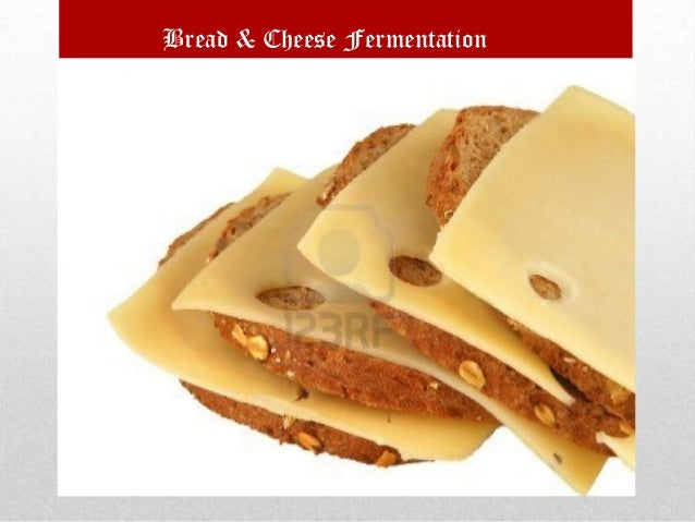Bread & Cheese Fermentation