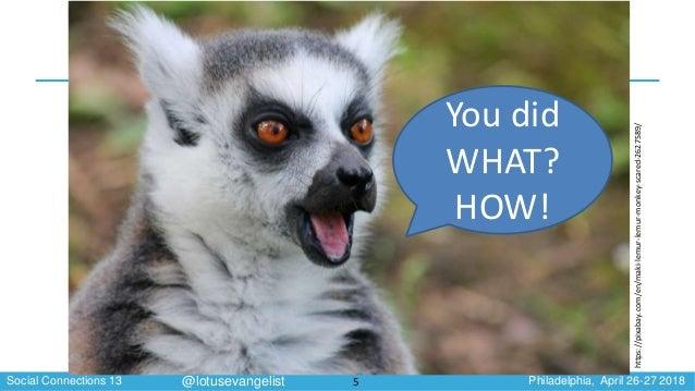 Social Connections 13 Philadelphia, April 26-27 2018@lotusevangelist You did WHAT? HOW! https://pixabay.com/en/maki-lemur-...