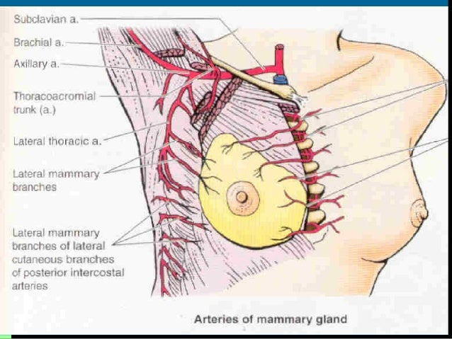 Sternum pain and breast cancer