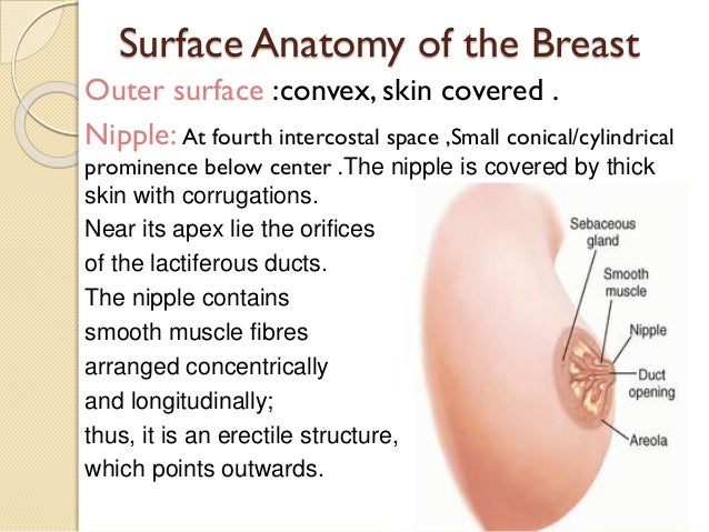 Cylinrical breast cancer