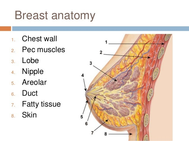 Breast pathology by Peter Bone