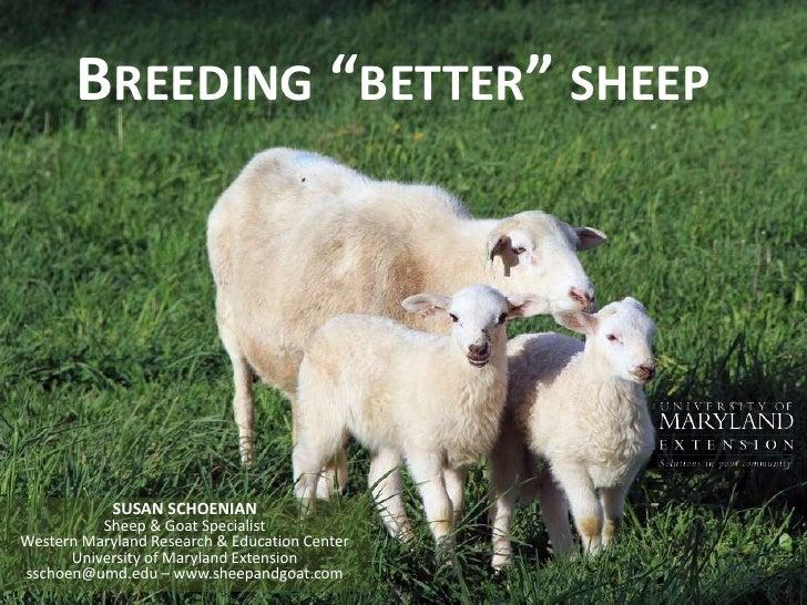 "Breeding ""better"" sheep<br />SUSAN SCHOENIANSheep & Goat SpecialistWestern Maryland Research & Education CenterUniversity ..."