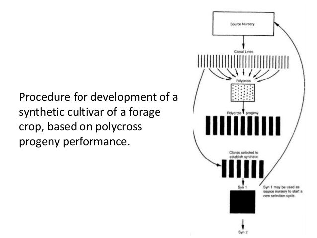 Procedure for development of a synthetic cultivar of a forage crop, based on polycross progeny performance.  ISHTIAQSHARIQ...
