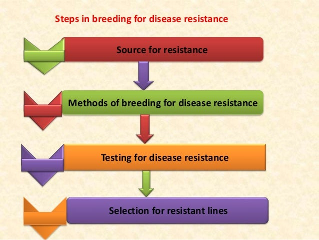 disease resistance breeding Of plant diseases proved to be unfounded when it was  'resistance breeding'  strategy throughout the 20th cen-  breeding of 'single gene' resistant varieties.