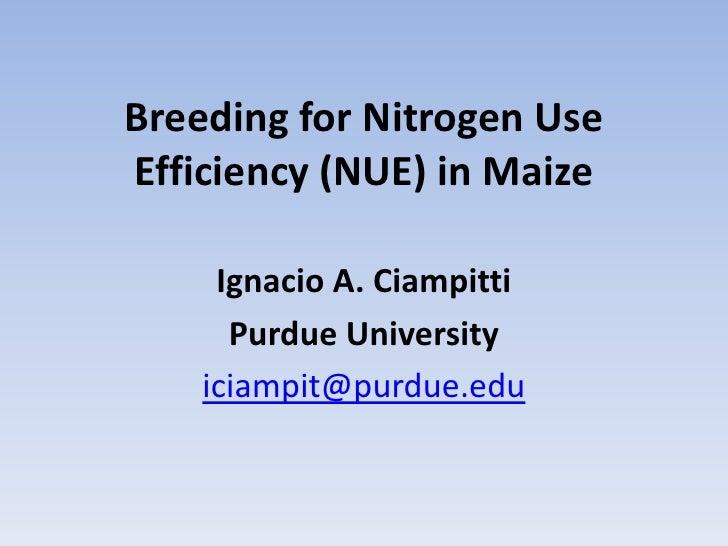 Breeding for Nitrogen Use Efficiency (NUE) in Maize<br />Ignacio A. Ciampitti<br />Purdue University<br />iciampit@purdue....