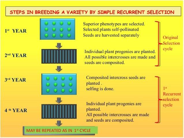 steps in plant breeding