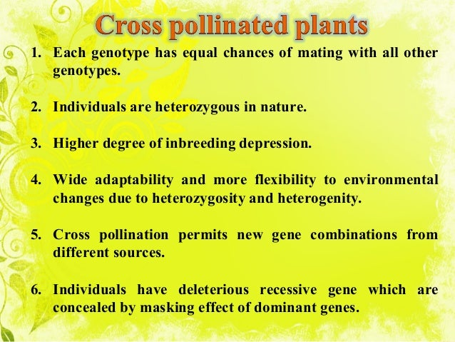 Breeding methods in cross pollinated crops.