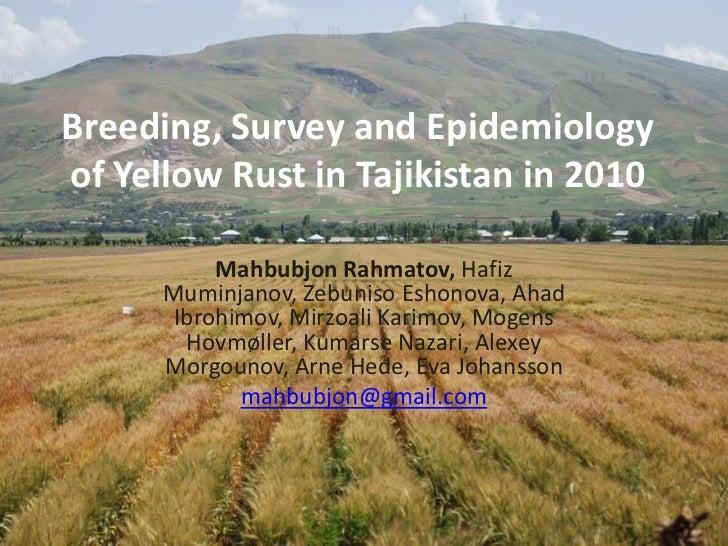 Breeding, Survey and Epidemiology of Yellow Rust in Tajikistan in 2010<br />Mahbubjon Rahmatov, Hafiz Muminjanov, Zebuniso...