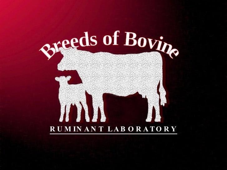Breeds of Bovine RUMINANT LABORATORY