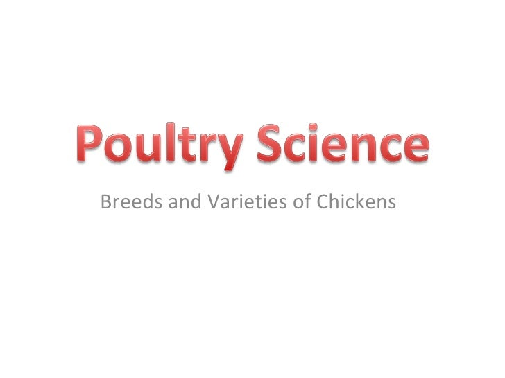 Breeds and Varieties of Chickens