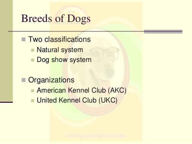 Breeds of Dogs & Cats
