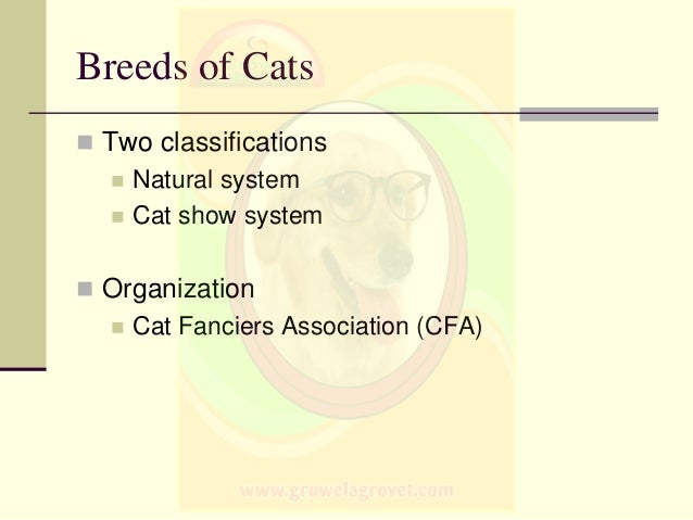 Breeds Of Dogs Amp Cats