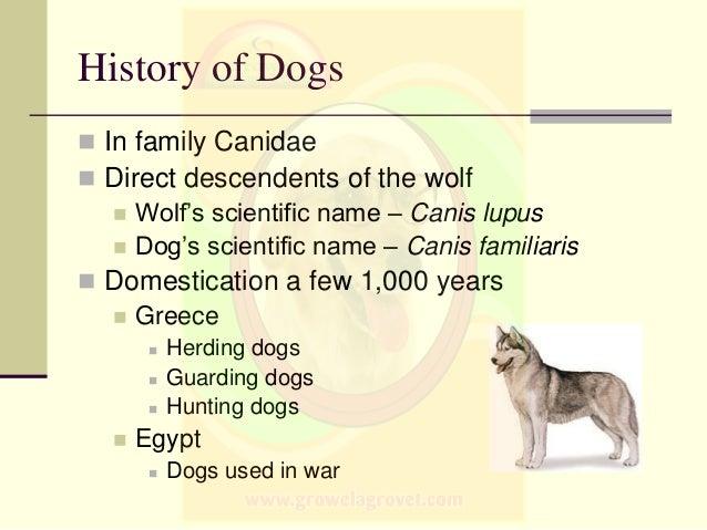 A Dog S Purpose Classification