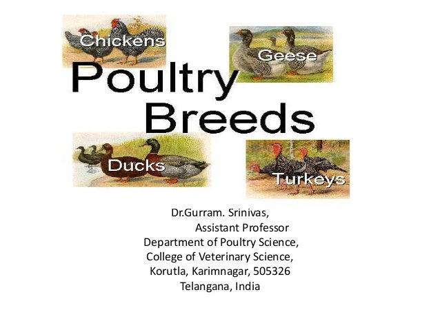 Dr.Gurram. Srinivas, Assistant Professor Department of Poultry Science, College of Veterinary Science, Korutla, Karimnagar...