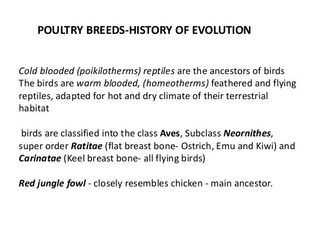 classification poultry breeds (chicken, turkey, duck and quail) Slide 2