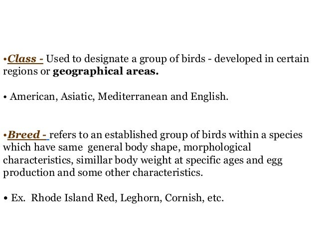 classification poultry breeds (chicken, turkey, duck and quail) Slide 3
