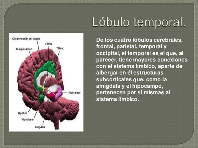 LOBULO TEMPORAL FUNCIONES EBOOK