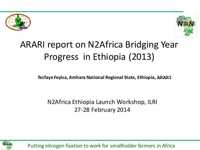 በሀዋሳ ዩኒቨርሰቲ የም ጋር በመተ HAWASSA UN DIRECTOR ARARI report on N2Africa Bridging Year Progress in Ethiopia (2013) Putting nitro...
