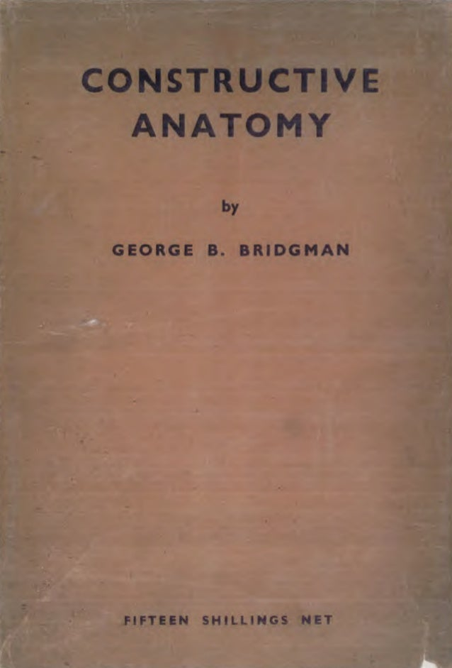 Bridgman   constructive anatomy