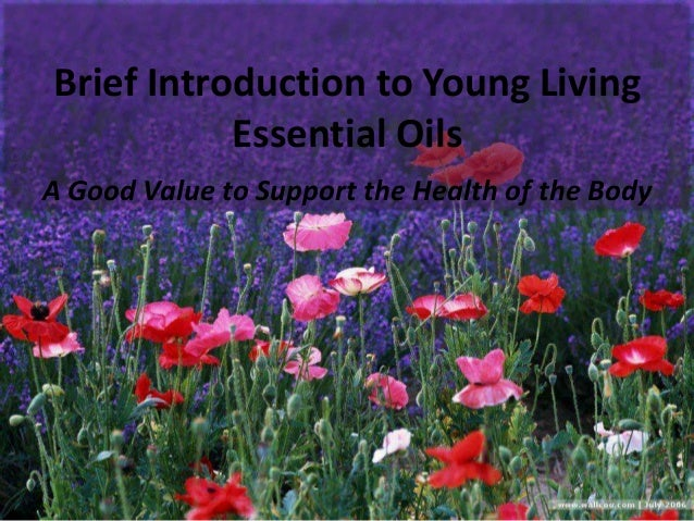 Brief Introduction to Young Living Essential Oils A Good Value to Support the Health of the Body
