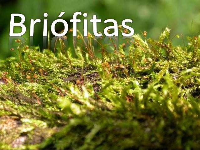 Introdução • Grupo formado por mais de 20.000 espécies. • Estão dividas em três filos: Hepatophyta, Anthocerophyta e Bryop...