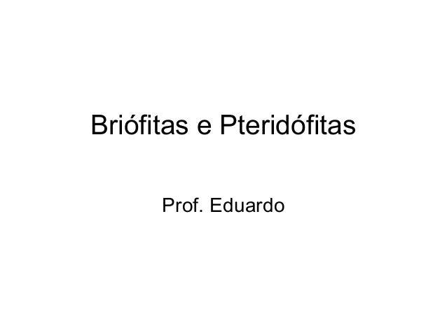 Briófitas e Pteridófitas      Prof. Eduardo