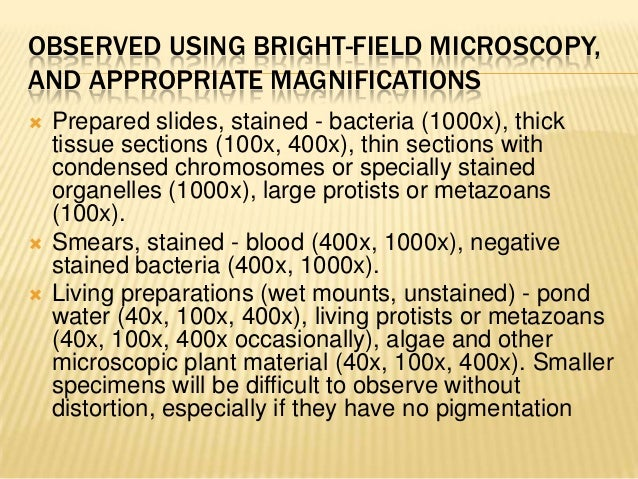 OBSERVED USING BRIGHT-FIELD MICROSCOPY,AND APPROPRIATE MAGNIFICATIONS Prepared slides, stained - bacteria (1000x), thickt...