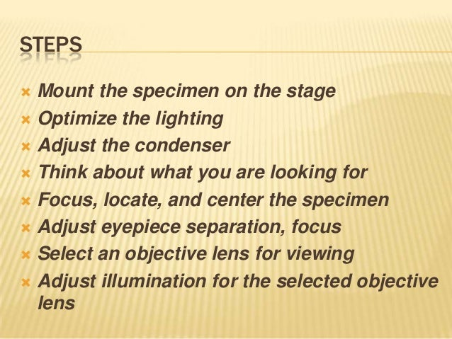 STEPS Mount the specimen on the stage Optimize the lighting Adjust the condenser Think about what you are looking for...
