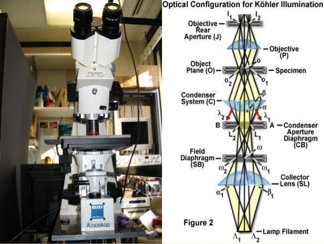 BASIC COMPONENTS OFTHE MICROSCOPEAND THEIR FUNCTIONS