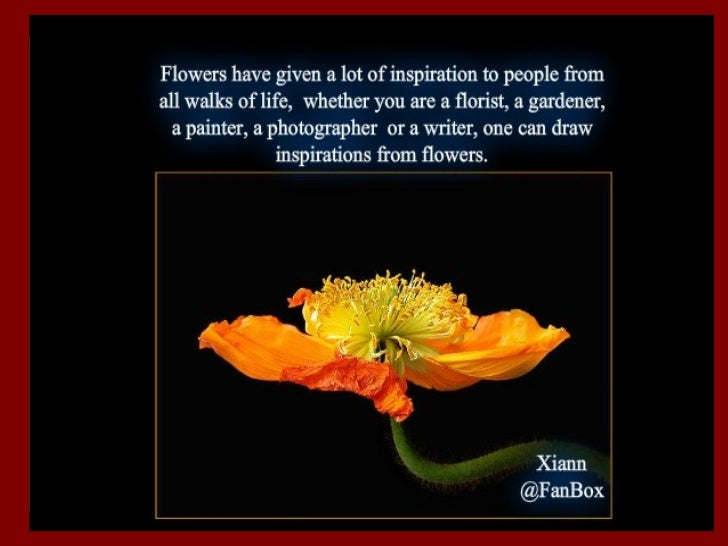Brilliant flower collections