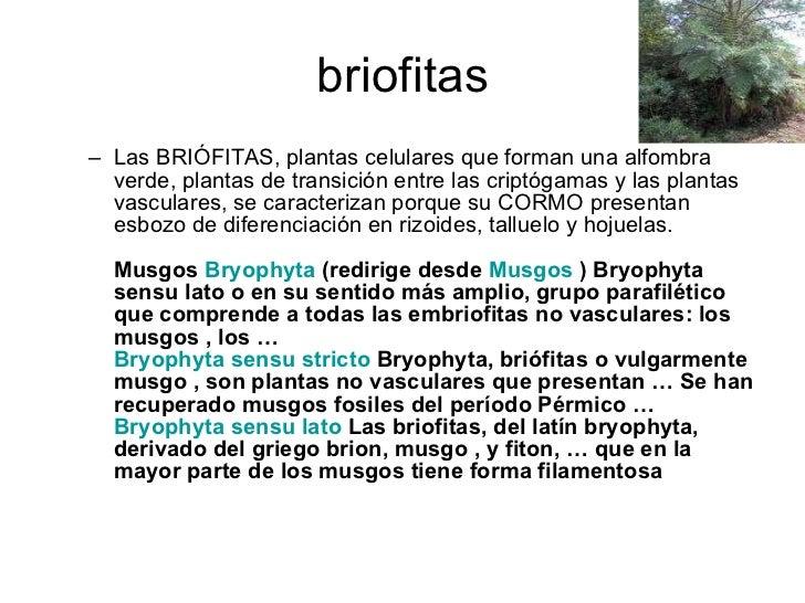 briofitas <ul><ul><li>Las BRIÓFITAS, plantas celulares que forman una alfombra verde, plantas de transición entre las crip...