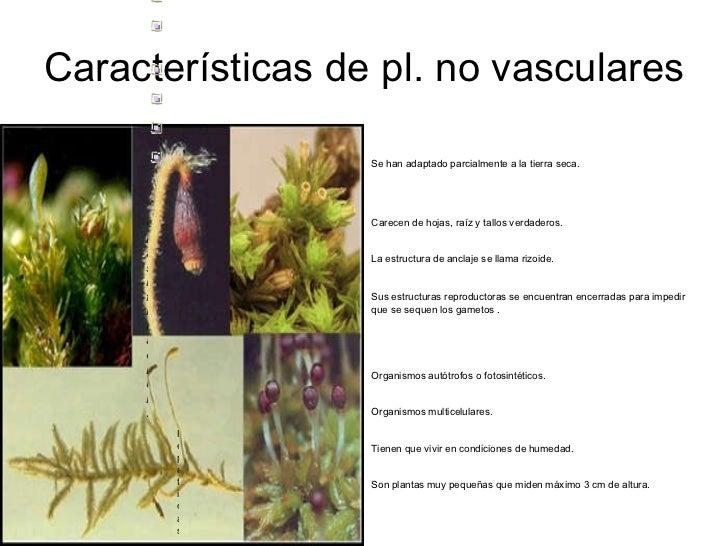 Briofitas for Cuales son las caracteristicas de un mural