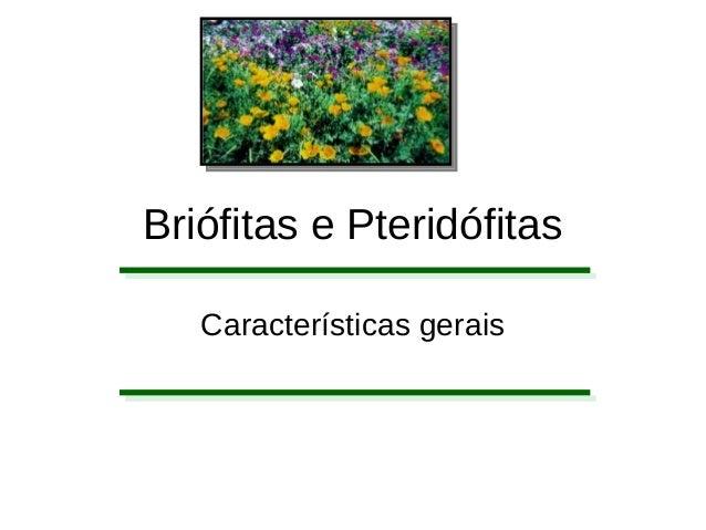 Briófitas e Pteridófitas Características gerais