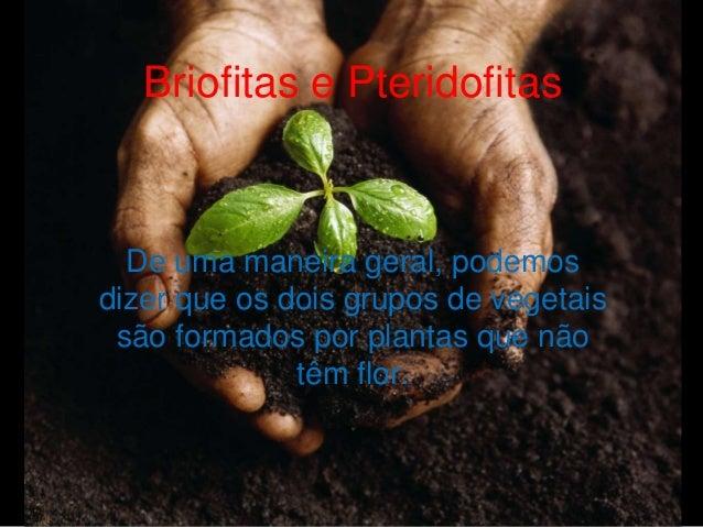 Briofitas e Pteridofitas De uma maneira geral, podemos dizer que os dois grupos de vegetais são formados por plantas que n...