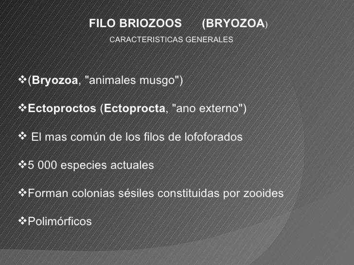 "FILO BRIOZOOS  (BRYOZOA ) <ul><li>CARACTERISTICAS GENERALES </li></ul><ul><li>( Bryozoa , ""animales musgo"")  </l..."