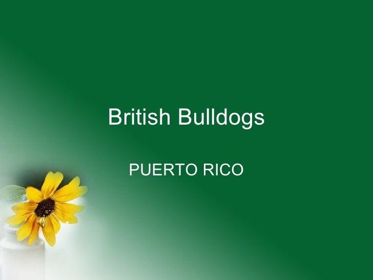 British Bulldogs PUERTO RICO