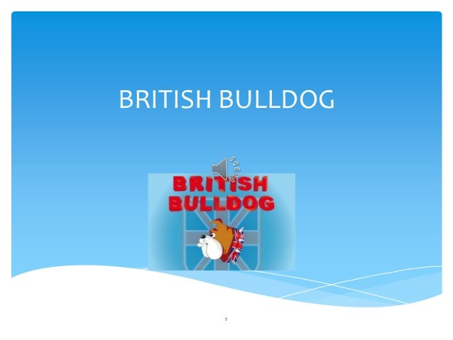 BRITISH BULLDOG 1