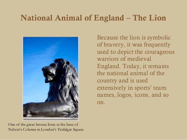 National Animal of England – The Lion                                               Because the lion is symbolic          ...