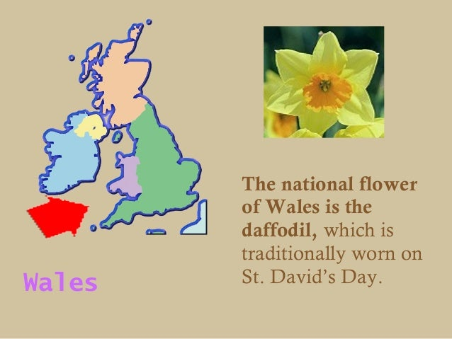 The national flower        of Wales is the        daffodil, which is        traditionally worn onWales   St. David's Day.